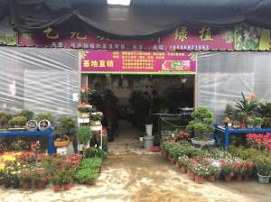 彭州市天彭镇艺无类花卉经营部