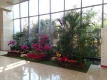 南京办公室花卉植物租赁养护