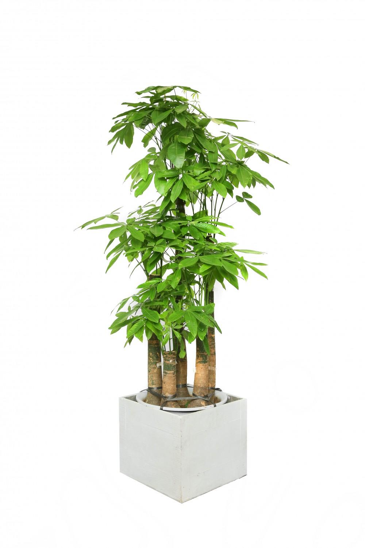 绿植花卉租赁销售