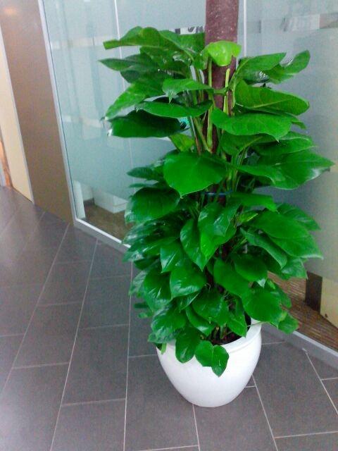 室内植物租摆