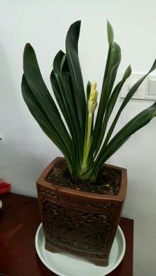 花卉綠植租賃