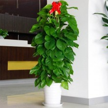 綠植花卉出租