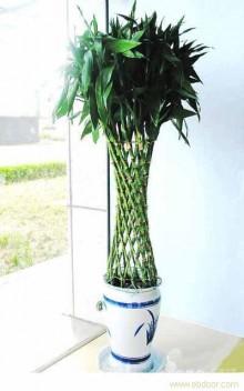 上海室内绿植租赁