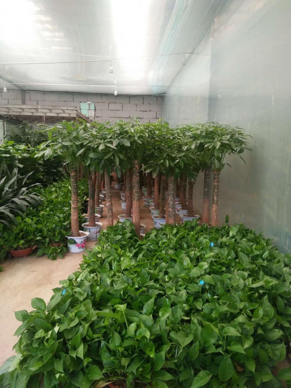 办公花卉,绿植物