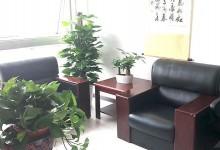 辦公室綠植+租賃