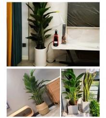 高端绿植租摆,尊享惬意办公空间
