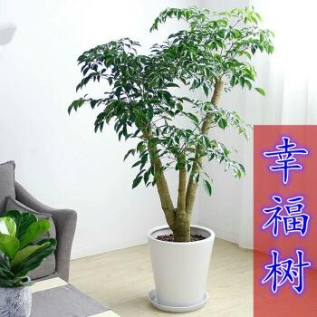 苏州办公绿植花卉租赁**设计终身维护